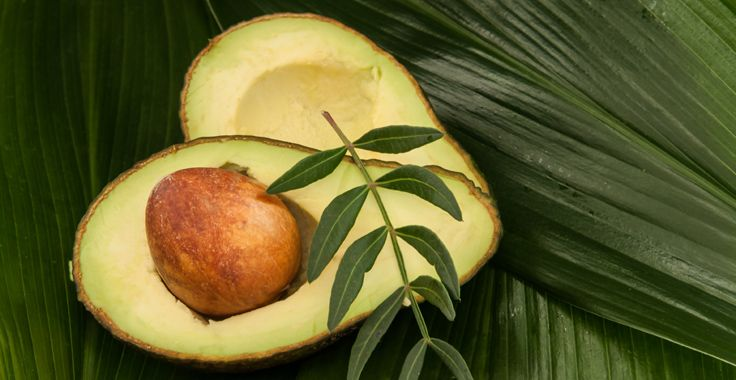 HH_SF_Avocados_Fotolia_49951290_Subscription_Monthly_XL_736x380