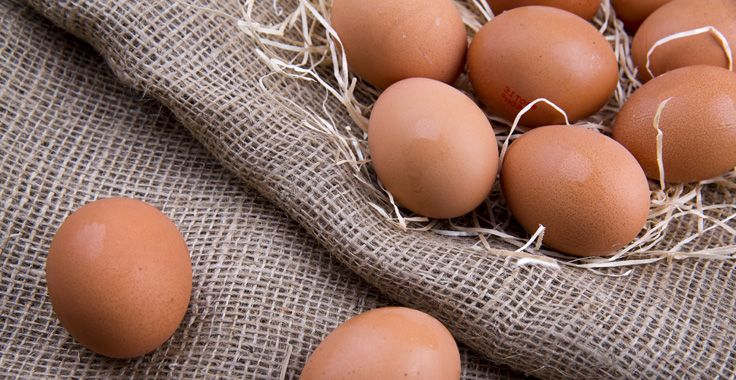HH_SF_Eggs_Fotolia_71137252_Subscription_Monthly_XXL_736x380