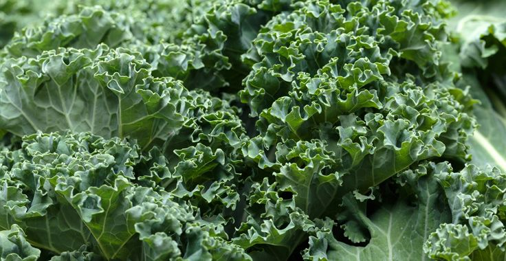 HH_SF_Kale_Fotolia_75039035_Subscription_Monthly_XXL_736x380